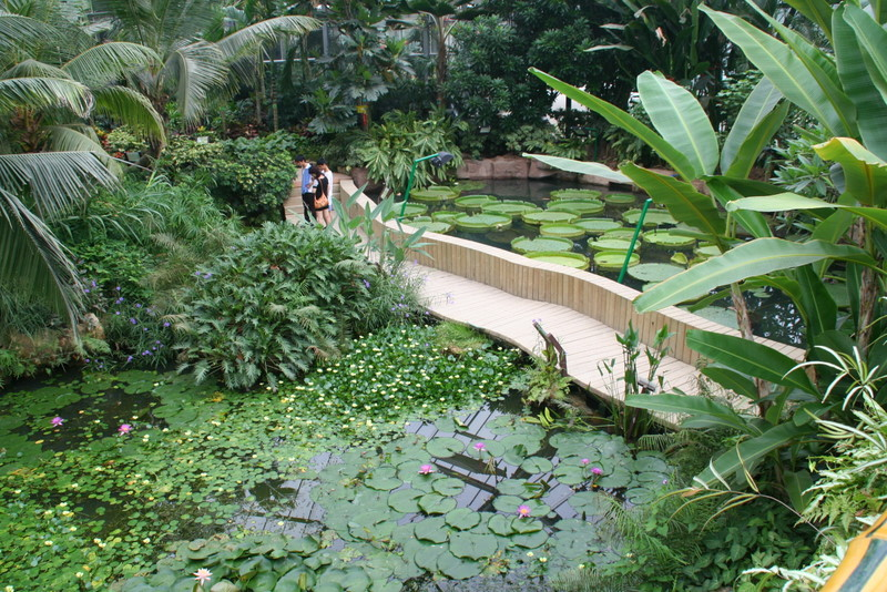 South-china-Botanical-Garden-AP-in-Conservatory